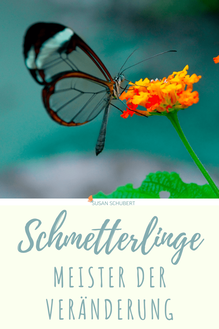 Schmetterlinge, Meister der Veränderung und Selbstverwirklichung